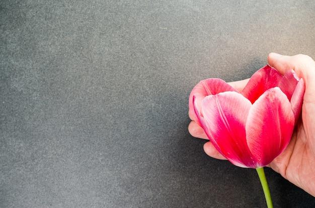 Hoge hoek die van een rode tulp op een zwarte oppervlakte is ontsproten