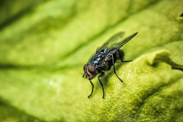 Hoge hoek die van een vlieg is ontsproten die zich op een groene achtergrond bevindt