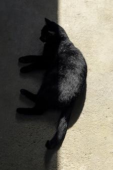 Hoge hoek die van een zwarte kat is ontsproten die ter plaatse ligt