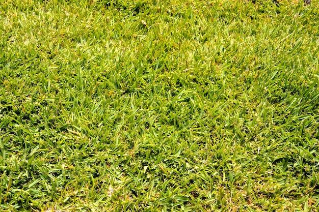 Hoge hoek die van groen gras overdag is ontsproten