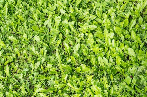 Hoge hoek die van het verse groene gras is ontsproten