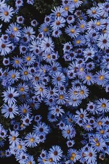 Hoge hoek die van kleine blauwe bloemen is ontsproten