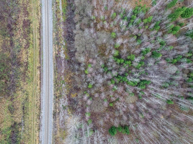 Hoge hoek die van mooie bomen in een bos dichtbij een weg is ontsproten