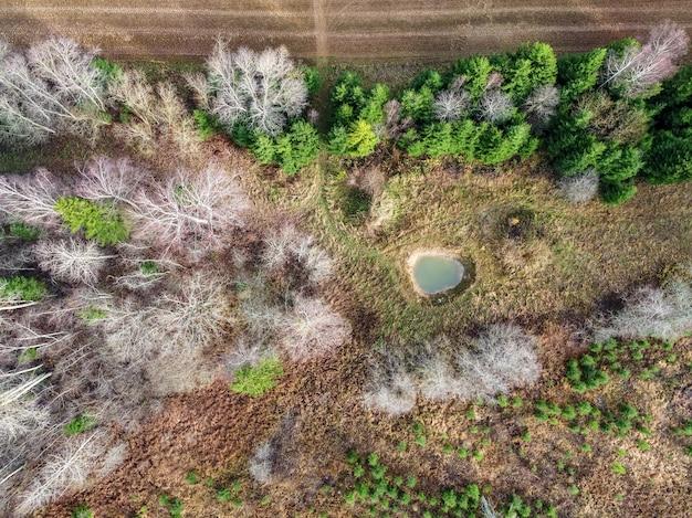 Hoge hoek die van mooie bomen in een bos is ontsproten