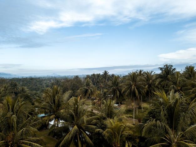 Hoge hoek die van palmen onder een blauwe bewolkte hemel is ontsproten
