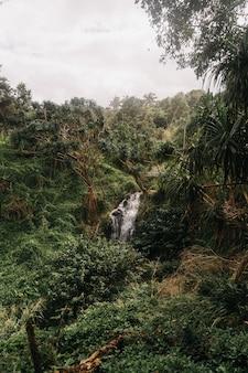 Hoge hoek die van watervallen in het bos met een sombere hemel is ontsproten