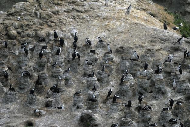 Hoge hoek die van zeevogels is ontsproten die zich op rotsen bevinden