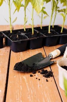 Hoge hoek jonge planten op de tafel