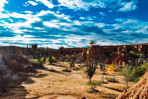 Hoge hoek opname van de exotische wilde planten die groeien tussen de rotsen in de tatacoa-woestijn, colombia