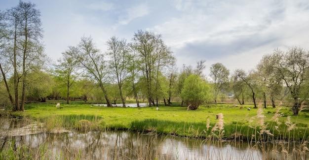 Hoge hoek opname van een park met een meer onder de donkere bewolkte hemel