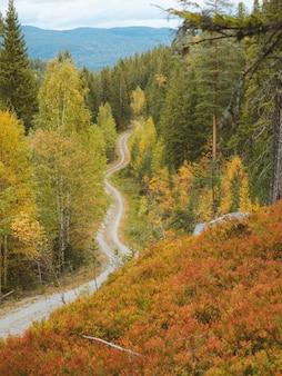 Hoge hoek opname van een smal weggetje omgeven door prachtige herfstkleurige bomen in noorwegen