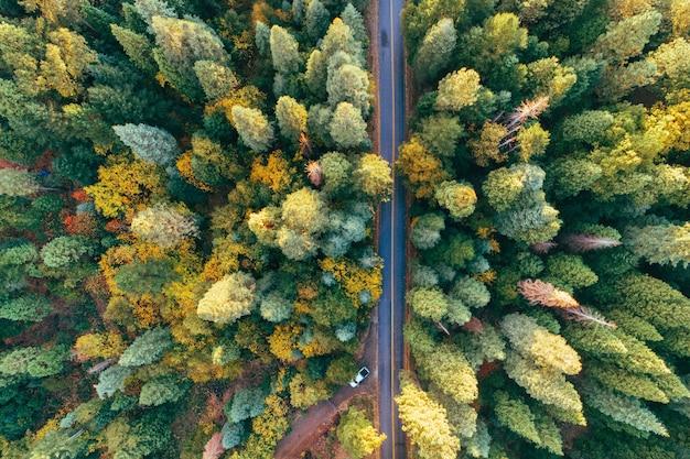Hoge hoek opname van een weg midden in een herfst bos vol kleurrijke bomen