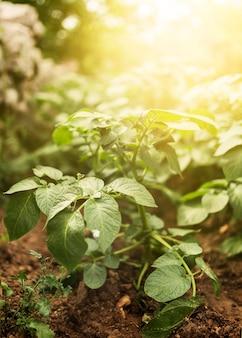 Hoge hoek plantage met zonnestralen