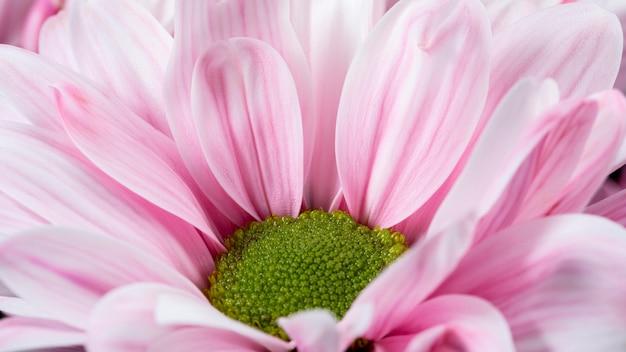 Hoge hoek roze bloemblaadjes macro natuur