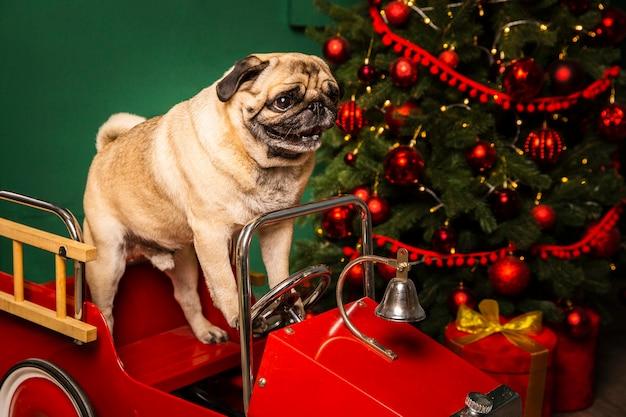 Hoge hoek schattige hond in santa sleight