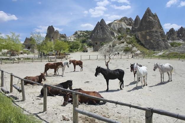 Hoge hoek schot van paarden in de buurt van enorme rotsformatie onder de bewolkte hemel