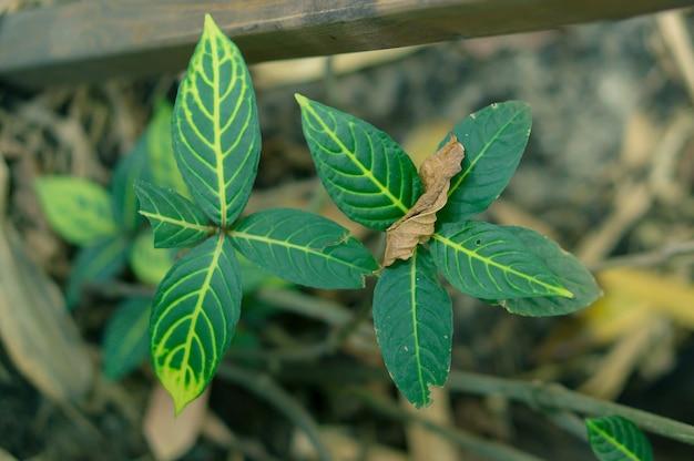 Hoge hoek selectieve focus shot van groene bladeren met een wazig