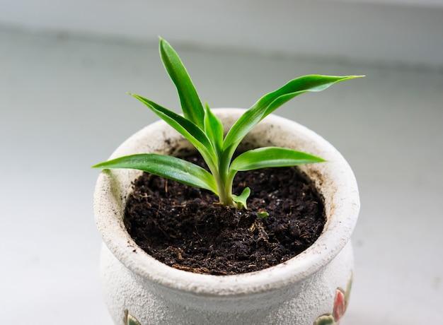 Hoge hoek shot van een spruit van gras groeit in een kom met grond