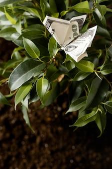 Hoge hoek van bankbiljet op plant met bladeren