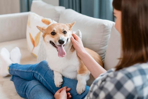Hoge hoek van de hond zittend op de schoot van de vrouw