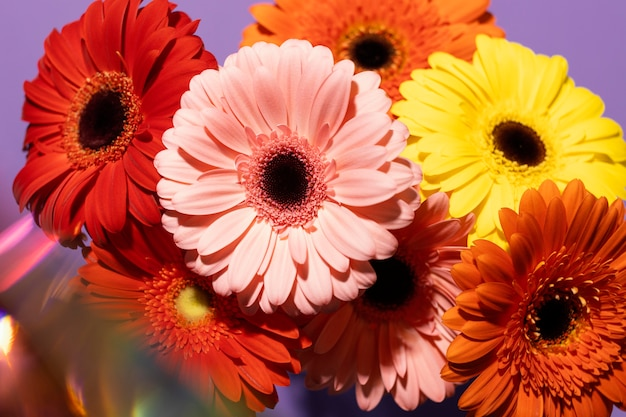 Hoge hoek van gerbera lentebloemen