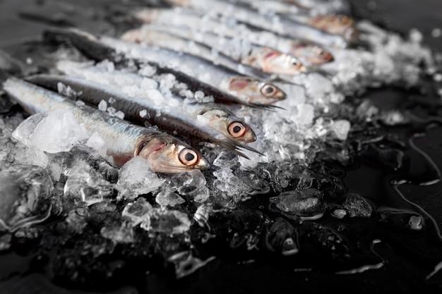 Hoge hoek van kleine vissen met ijs