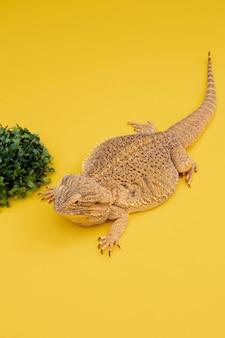 Hoge hoek van leguaanhuisdier met vegetatie