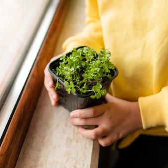 Hoge hoek van meisje met kleine plant thuis