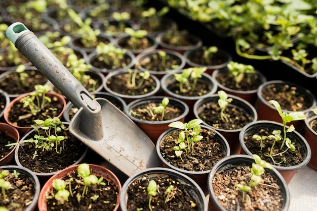 Hoge hoek van potplanten en schop