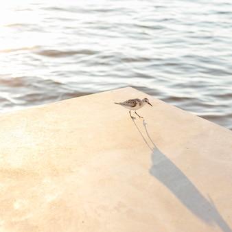 Hoge hoek van zeemeeuw door het meer