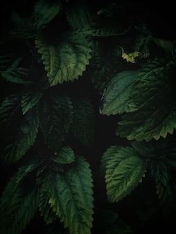 Hoge hoek verticale close-up shot van groene bladeren groeien in het midden van een tuin