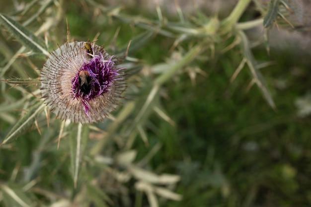 Hoge hoek wilde bloem