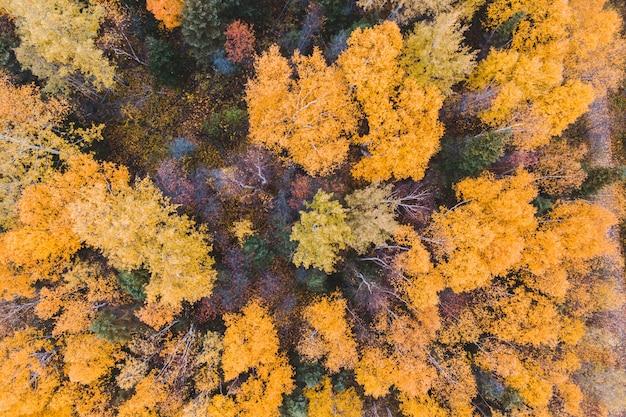 Hoge hoekfoto van bos