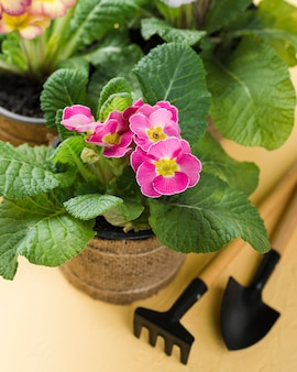 Hoge hoekhulpmiddelen naast bloeiende bloempot