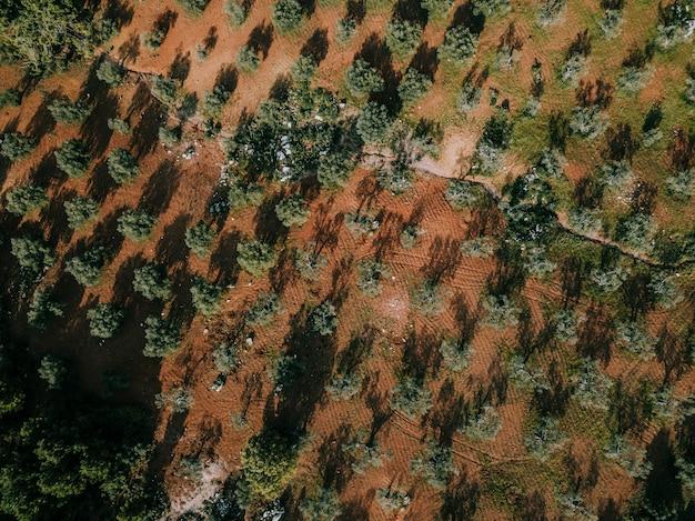 Hoge hoekmening van bomen die op land groeien
