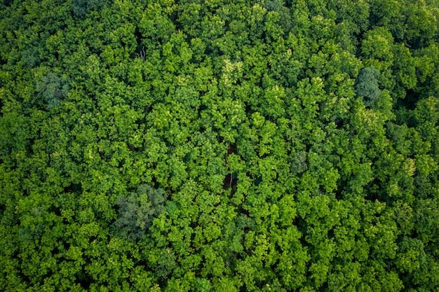Hoge hoekmening van de groene boom in het regenseizoen van thailand