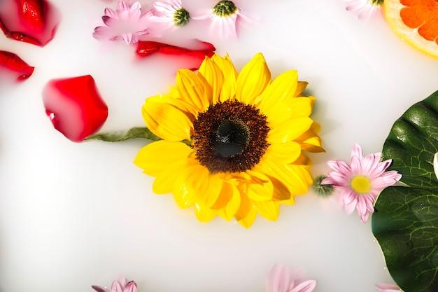 Hoge hoekmening van gele bloemen en bloemblaadjes die op melk drijven