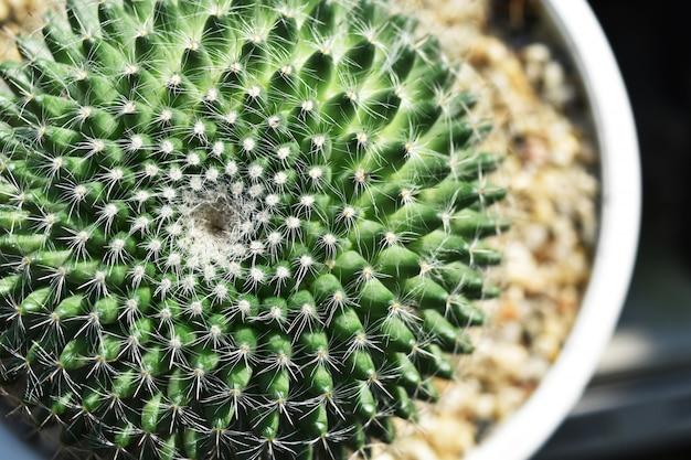 Hoge hoekmening van groene cactus voor achtergrond