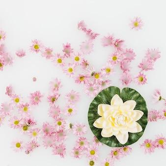 Hoge hoekmening van lotusbloem en roze bloemen die op witte vloeistof drijven