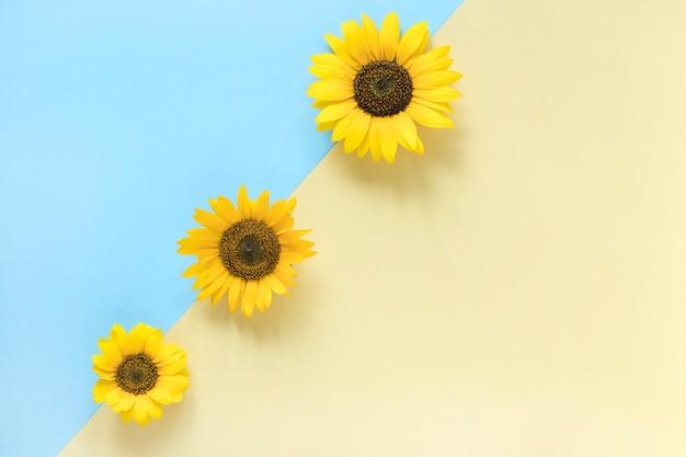 Hoge hoekmening van zonnebloemen op dubbele kleurrijke achtergrond
