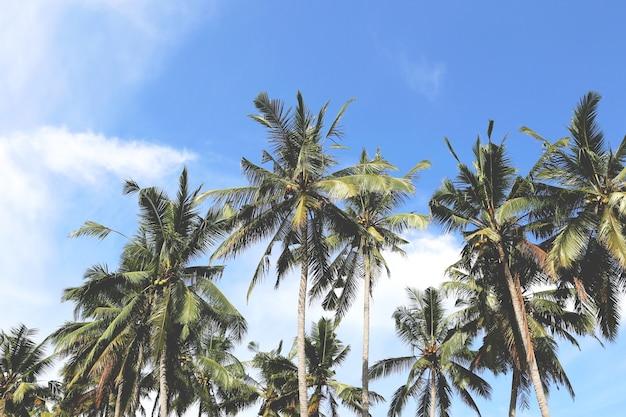 Hoge palmbomen vanaf de onderzijde.