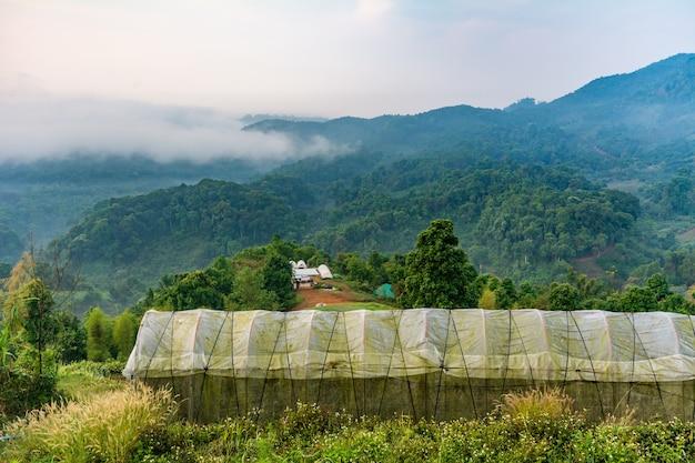 Hoge tunnelserre organische moestuin op de heuvel in chiang rai