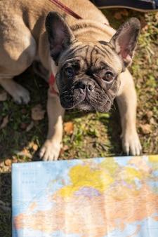 Hoge weergave schattige hond en kaart