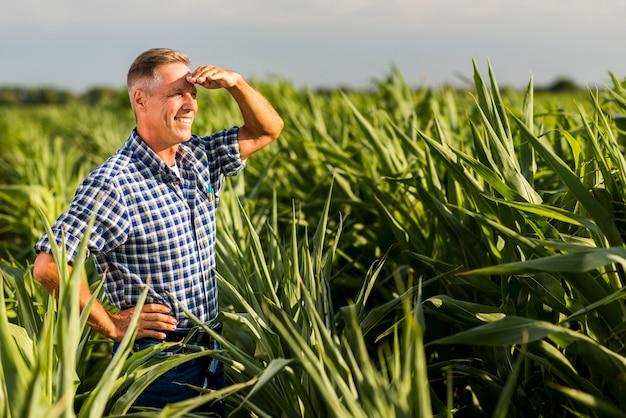 Hogere agronoom die weg in cornfield kijkt