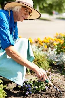 Hogere vrouw die bloemen in tuin plant