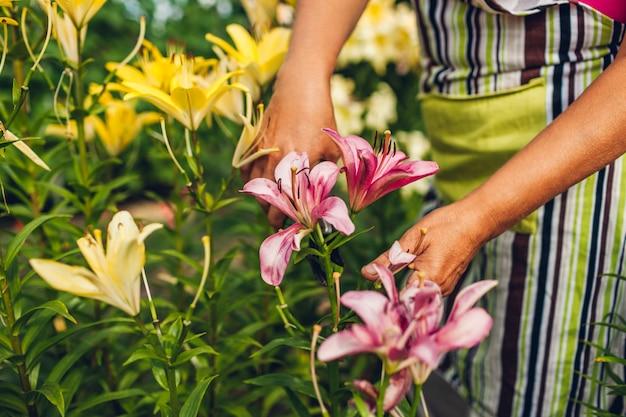 Hogere vrouw die bloemen in tuin verzamelt