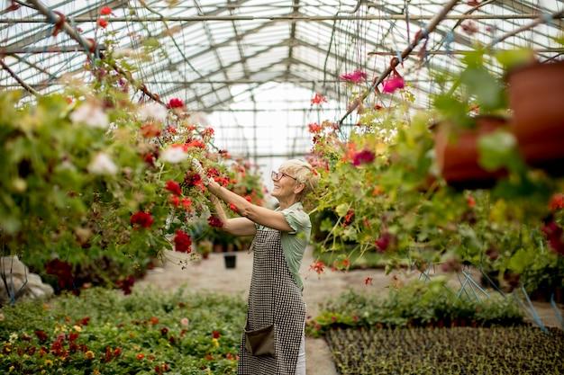 Hogere vrouw die in bloementuin werkt