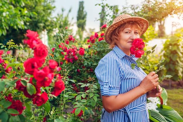 Hogere vrouwentuinman die rozenbloemen in tuin verzamelt. vrouw die op middelbare leeftijd roze rozen ruikt. tuinieren hobby concept