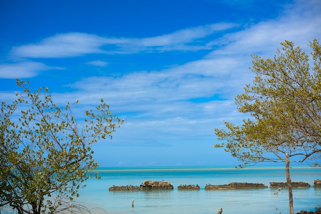 Holbox tropisch eiland mangroove in mexico