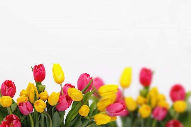 Holland roze en gele tulpen